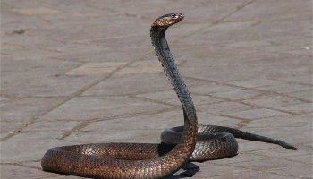 Sonhar com Cobra – Significado e Números da Sorte
